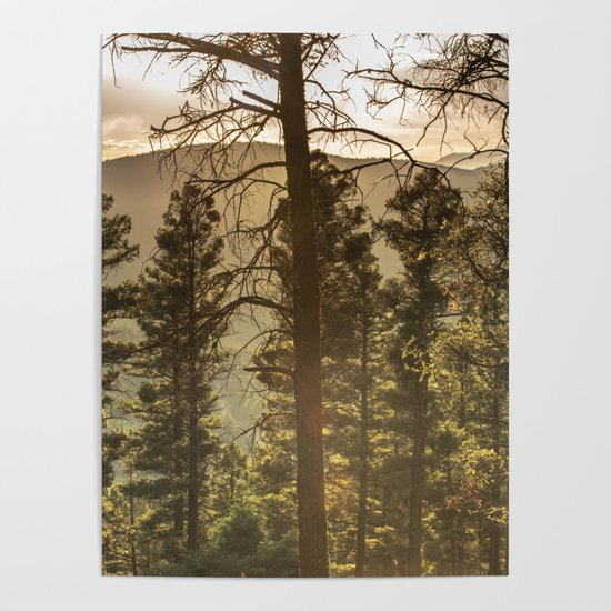 Mountain Forest New Mexico - Nature Photography by cascadia