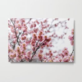 The First Bloom Metal Print