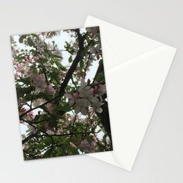 Lighted Branches Stationery Cards