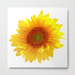Sunflower 11 Metal Print