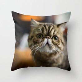Grumpy Exotic Persian Cat Throw Pillow