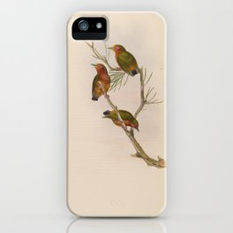 Malayan Piculet iPhone Case