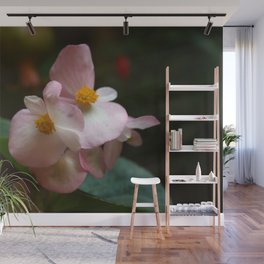 Wax Begonia Flowers Wall Mural