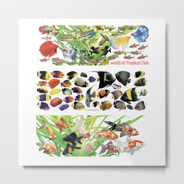 3 kinds of Aquarium fish Metal Print