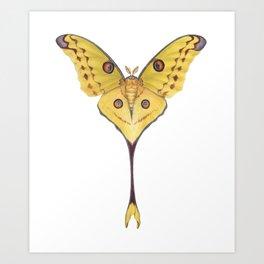 Comet moth (Argema mittrei) Art Print