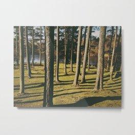tall trees. tarn hows, lake district, uk Metal Print