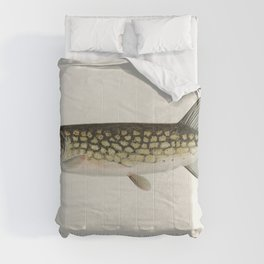Pickerel (Lucius Reticulatus Le Sueur from a pond in Massachusetts) illustrated by Sherman F Denton Comforters