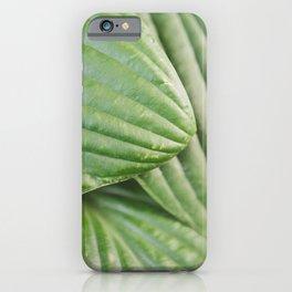 Hosta Leaves iPhone Case