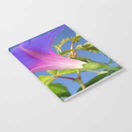Close Up Of Ipomoea with Leaf and Sky Background Notebook