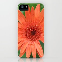 Orange Gerber Daisy iPhone Case