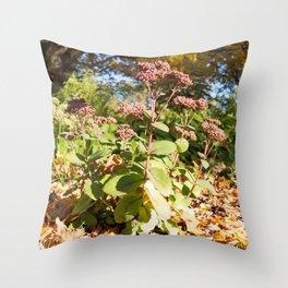 Sedum 12 Throw Pillow