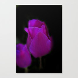 blossoms on black background -01- Canvas Print