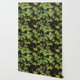 Redwood Sorrel - Nature Photography Wallpaper