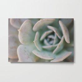 succulent ... Metal Print
