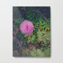 Sleeping Grass Metal Print