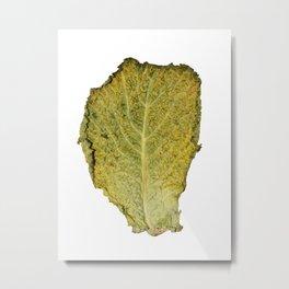 Colour Cabbage 1 Metal Print