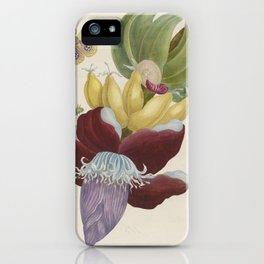 Maria Sibylla Merian Fruits Banana iPhone Case