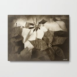 Mixed Color Poinsettias 2 Antiqued Metal Print