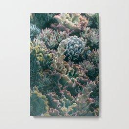 Mornings In The Succulent Garden #1 Metal Print