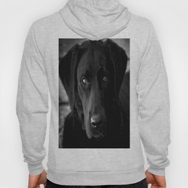 Loyalty  Black Lab  Hoody