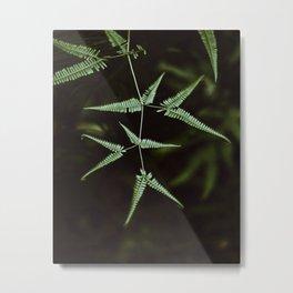 FERNLEAF II Metal Print