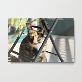 Calliope on the Porch Metal Print