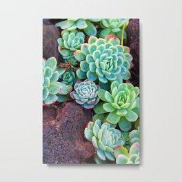 Green Succulents Metal Print