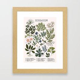 Herbarium ~ vintage inspired botanical art print ~ white Gerahmter Kunstdruck