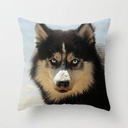 Husky Dog Breed Throw Pillow