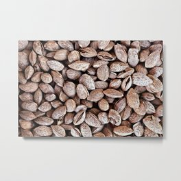 Almond Shells Metal Print