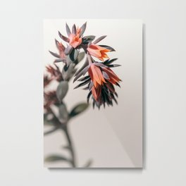 Summer Succulent #2 Metal Print
