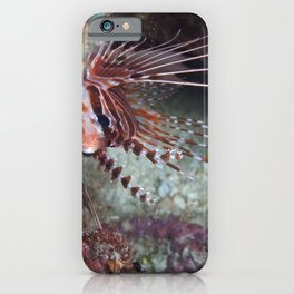 Lionfish juvenile hiding in a cave iPhone Case