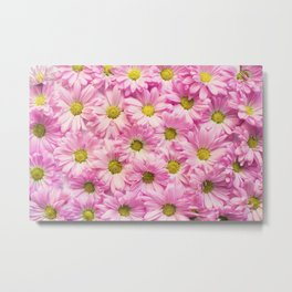 Arrangement of delicate pink blossoms Metal Print