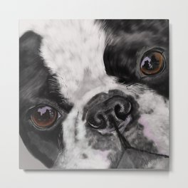 Boston Terrier Up Close and Personal Metal Print