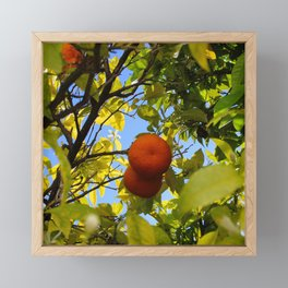 Two oranges inside a tree canopy Framed Mini Art Print
