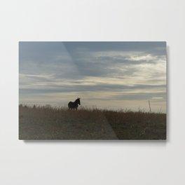 Mule in the Pasture Metal Print
