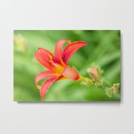 Tiger Lily 1 Metal Print