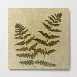 Ferns by Kathy Morton Stanion Metal Print