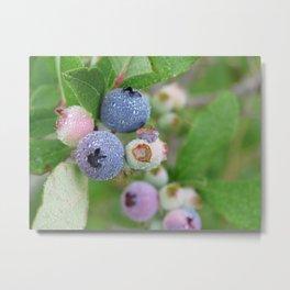 Early Morning Berries Metal Print