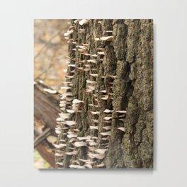 Stacking fungus Metal Print