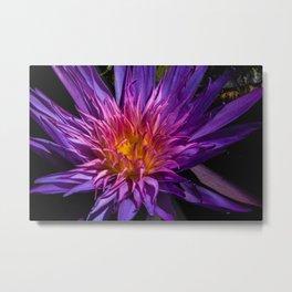 Purple Water Lily Metal Print