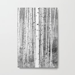 Aspen Trees in Black & White Metal Print