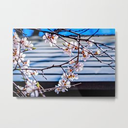 Delicate Flowers Of A Japanese Apricot Tree Against The Garden Pavilion Roof Metal Print