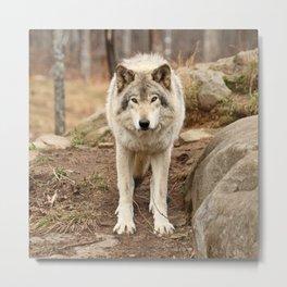 Woodland Wolf Metal Print