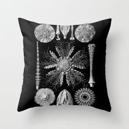 Sand Dollars (Echinidea) by Ernst Haeckel Throw Pillow