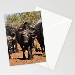 Cape Buffalo. Stationery Cards