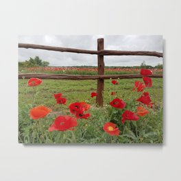 Poppies with Cedar Fence Metal Print