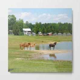 Horses. Animals. Nature Photography. Pennsylvania Metal Print