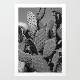 B&W Cacti Art Print
