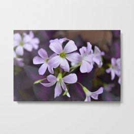 Delicate Lavender Petals Metal Print
